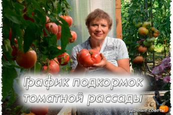 График подкормок томатной рассады