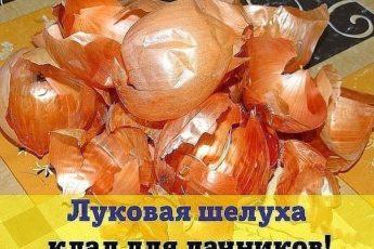 ЛУКОВАЯ ШЕЛУХА - КЛАД ДЛЯ ДАЧНИКОВ