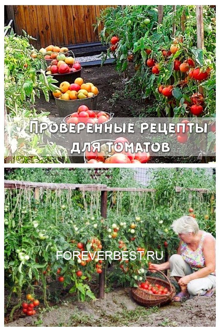 Проверенные рецепты для томатов
