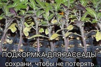 ПОДКОРМКА ДЛЯ РАССАДЫ