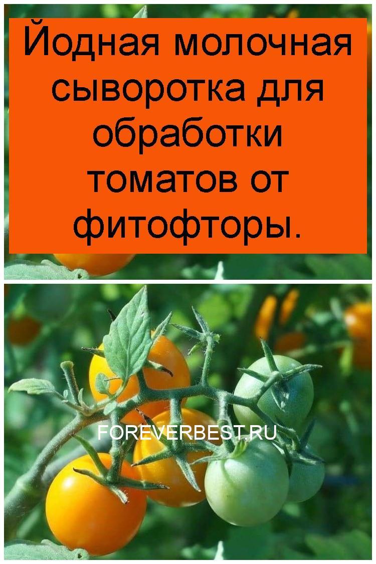 Йодная молочная сыворотка для обработки томатов от фитофторы 4