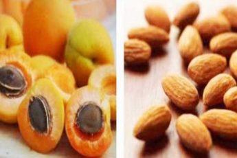 Абрикосовые косточки — лекарство для сердца, ног и бронхов. Что лечат ядрышки абрикоса 1